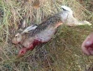 Ловечко друштво  Тиквеш  Кавадарци со апел да запре ловот на полезен дивеч