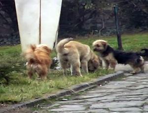Се намножија кучиња скитници во Кавадарци   проблемот нема кој да го реши