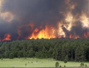 Втор ден пожар во селото Галиште    огнот се шири